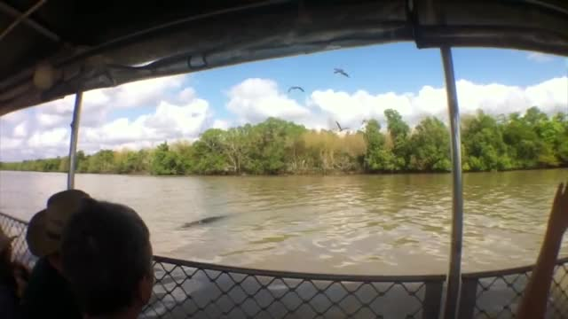 Watch and share Crocodile Attempts To Board A Boat GIFs by Beef on Gfycat