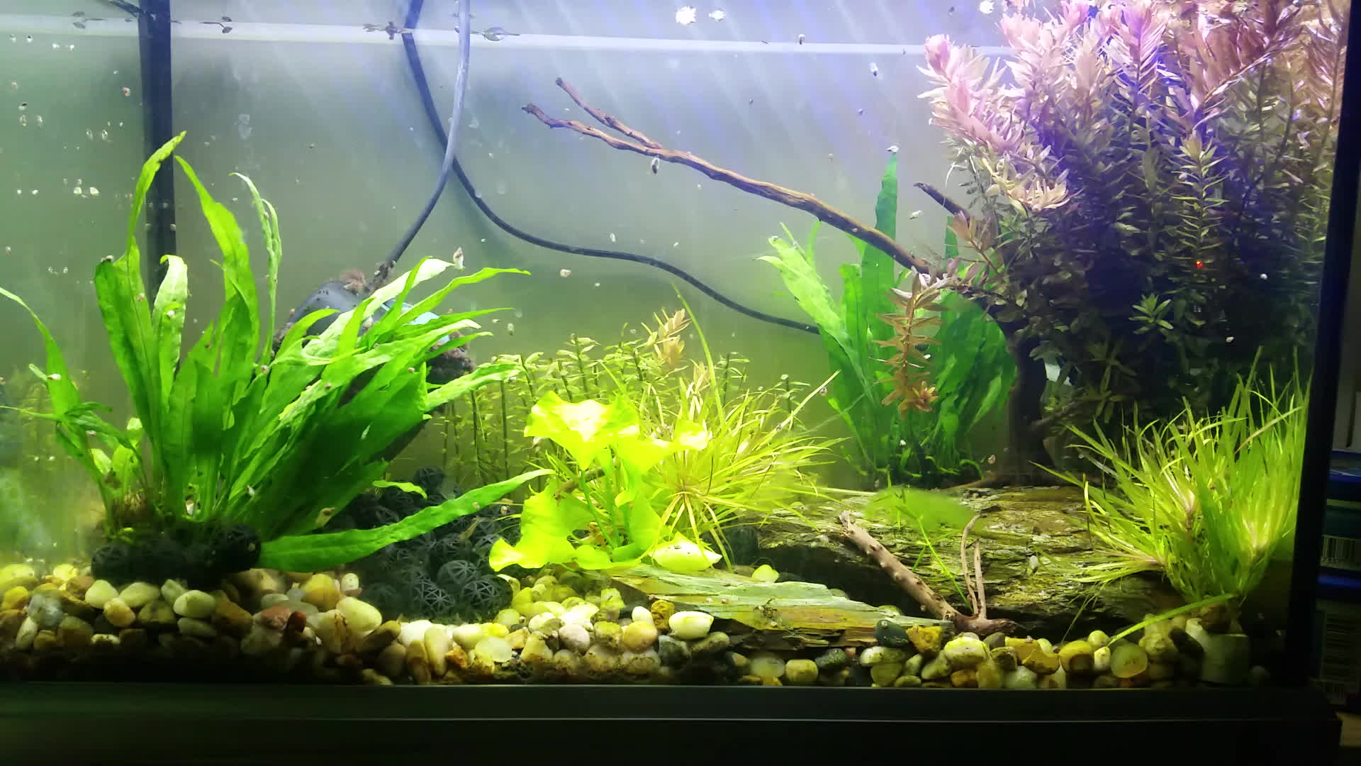 Planted Tank Gifs Search | Search & Share on Homdor