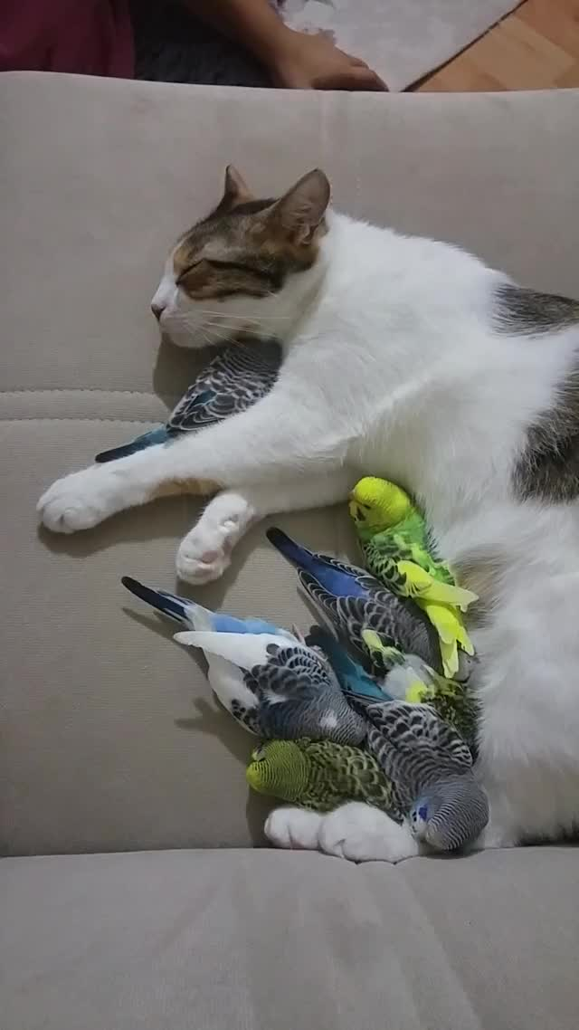 Watch this birds GIF by LimeLights  (@makeagiffoundation) on Gfycat. Discover more birds, cat GIFs on Gfycat