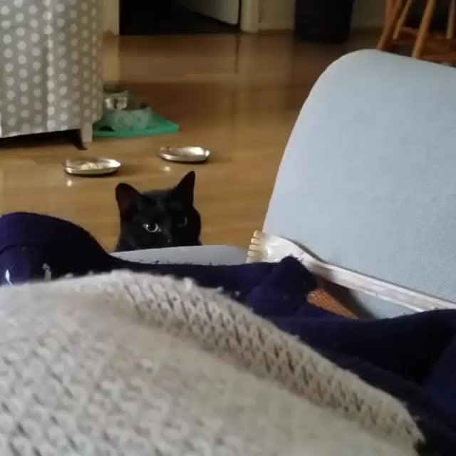 Watch and share /r/CatsBeingCats - From Mrbeansanddjango GIFs by cakejerry on Gfycat