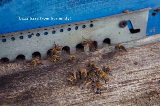 joelix beekeeper GIFs