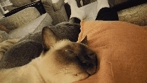 catgifs, Caught my cat dreaming with his eyes open, creepy... (reddit) GIFs