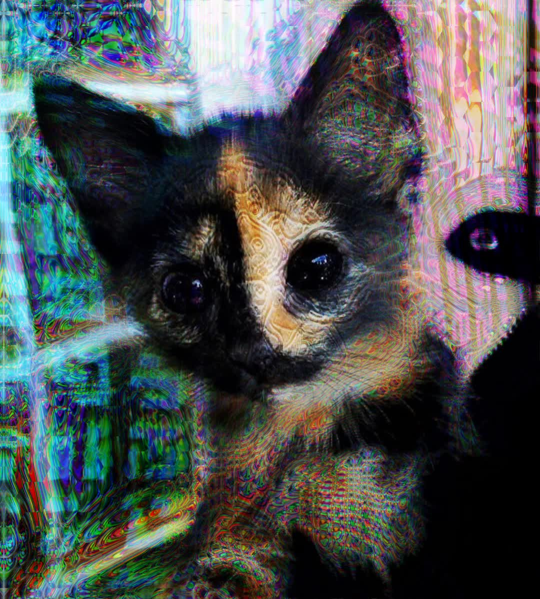 acid trip, dmt trip, dmt visuals, psychedelic, psychedelic replication, psychedelic trip, psychedelic trip visuals, psychedelic visuals, psychedelics, Sub-breakthrough DMT Kitty GIFs