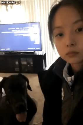 Watch and share Honeycam 2018-03-16 09-28-06 GIFs on Gfycat