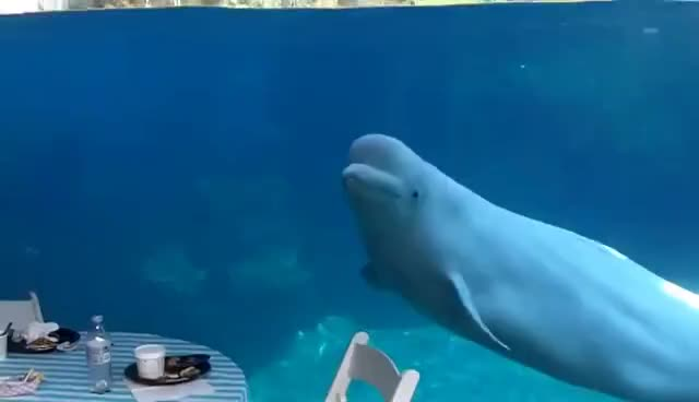 Beluga whales and 2 kids GIFs