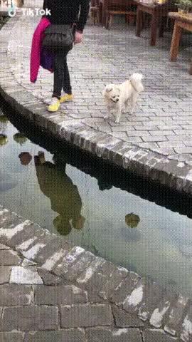 Watch and share Doggo: Why? GIFs on Gfycat
