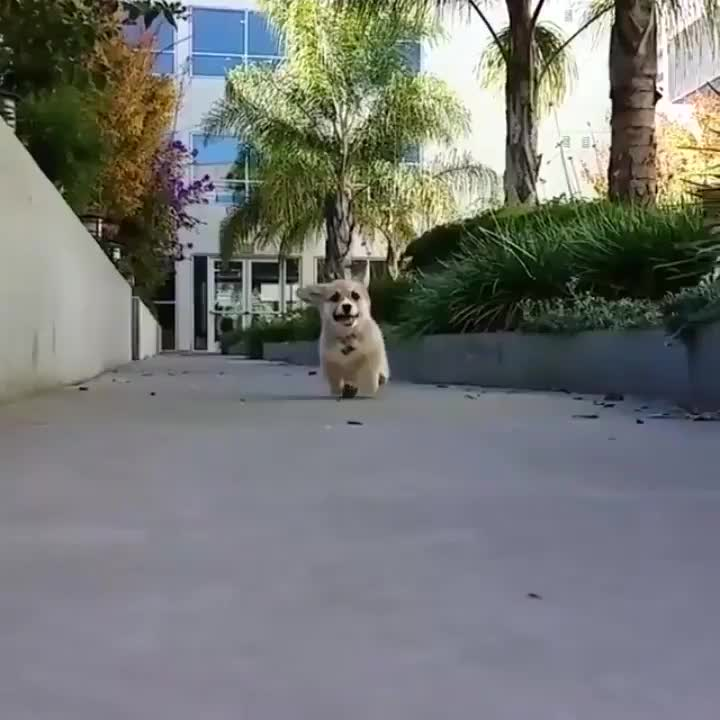 Pupper's life flashed before their eyes for a moment GIFs