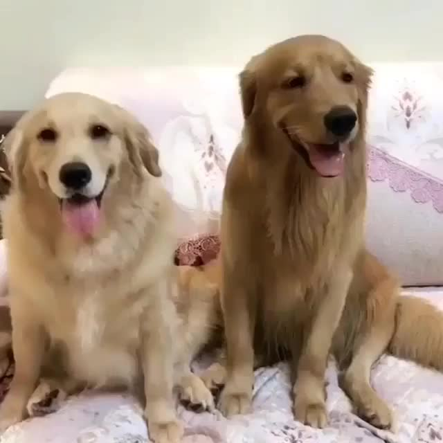 Watch and share Dailypuppy GIFs and Dogslover GIFs on Gfycat