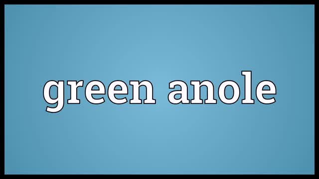 Watch and share Green Anole Meaning GIFs and Audio Dictionary GIFs on Gfycat