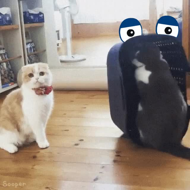 Watch this cats GIF by sooperdavid (@sooperdavid) on Gfycat. Discover more badcat, cat, cats, reallifedoodles GIFs on Gfycat