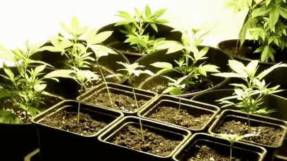 Watch and share Marihuana GIFs on Gfycat