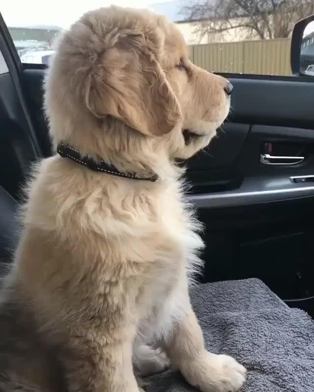 Watch and share Labrador Videos GIFs and Labradordog GIFs by Олеся on Gfycat