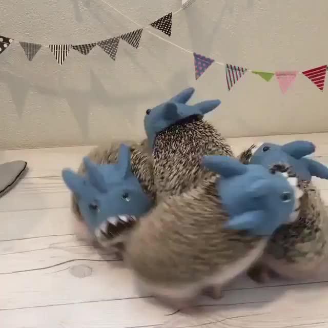 animal, animals, hedgehog, hedgehog sharks GIFs
