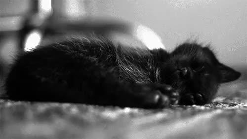 Watch and share Couple Sleep GIFs on Gfycat