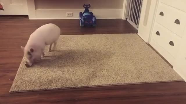 Watch and share Animals Playing GIFs and Animals Play GIFs by lnfinity on Gfycat