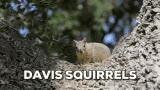 Watch and share Dav David GIFs on Gfycat