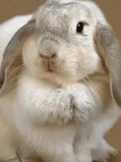 Watch and share Bunny Ear GIFs on Gfycat