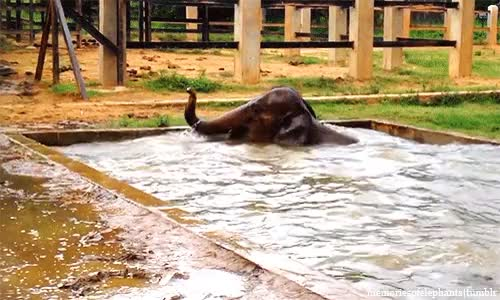 Watch and share Asian Elephant GIFs and Precious Cutie GIFs on Gfycat