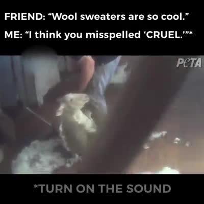 Hình ảnh rợn người bên trong xưởng thu hoạch lông cừu khiến bạn muốn từ bỏ những chiếc áo đắt giá
