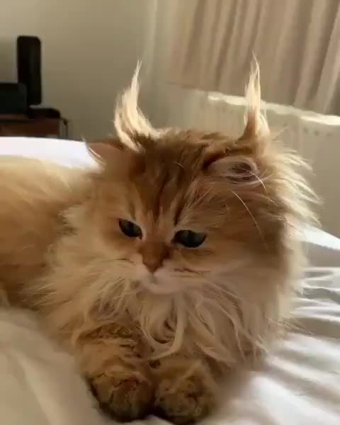 Watch and share Cat GIFs by Nomorefoxgiven on Gfycat