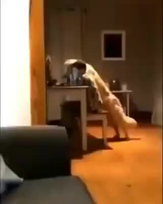 Watch and share A Boy And His Dog GIFs by AcceptableJunket on Gfycat