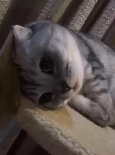 cat, kitten, balloffur GIFs