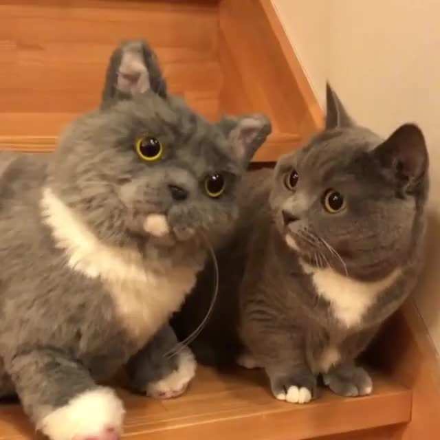 Watch and share Kitties GIFs and Plushie GIFs by Unsurprised on Gfycat