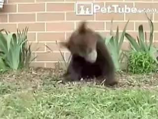 bear, sneezing, bear sneezing GIFs