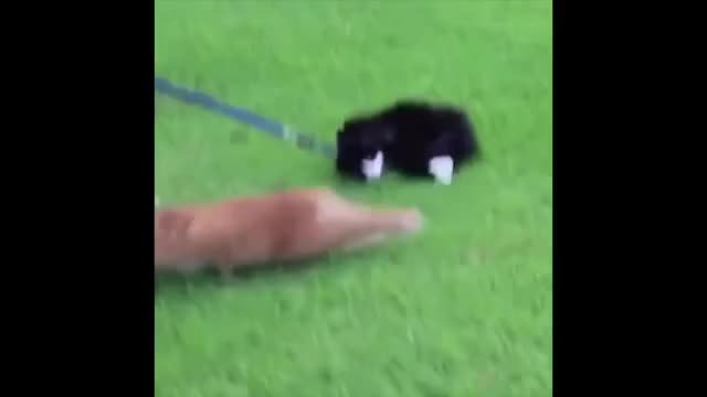 Watch Cat GIF on Gfycat. Discover more cat, funny, vine GIFs on Gfycat