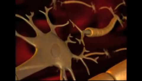 Watch and share Synapses GIFs and Neurons GIFs on Gfycat