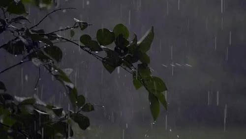 Watch and share Raining GIFs and Rain GIFs on Gfycat
