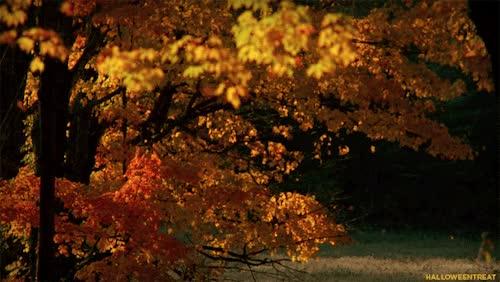 Watch and share Raking Leaves GIFs on Gfycat