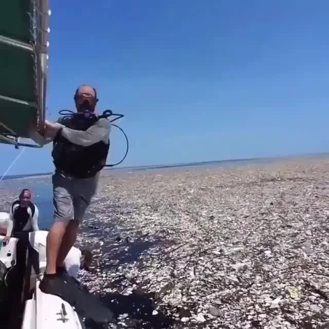 Watch and share Garbage Patch GIFs by PM_ME_STEAM_K3YS on Gfycat