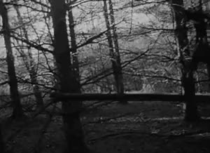 Watch The Blair Witch Project (1999) GIF on Gfycat. Discover more Black and White, Creepy, Dark, Spooky, The Blair Witch Project, Warning, mygif GIFs on Gfycat