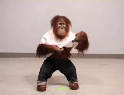 Watch this monkey GIF on Gfycat. Discover more animals, monkey, primate, zoo GIFs on Gfycat
