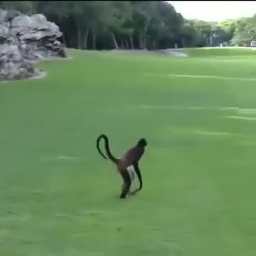 Watch and share Monkey GIFs and Crazy GIFs on Gfycat