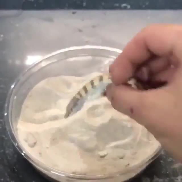 Watch and share Sandfish Lizard GIFs on Gfycat