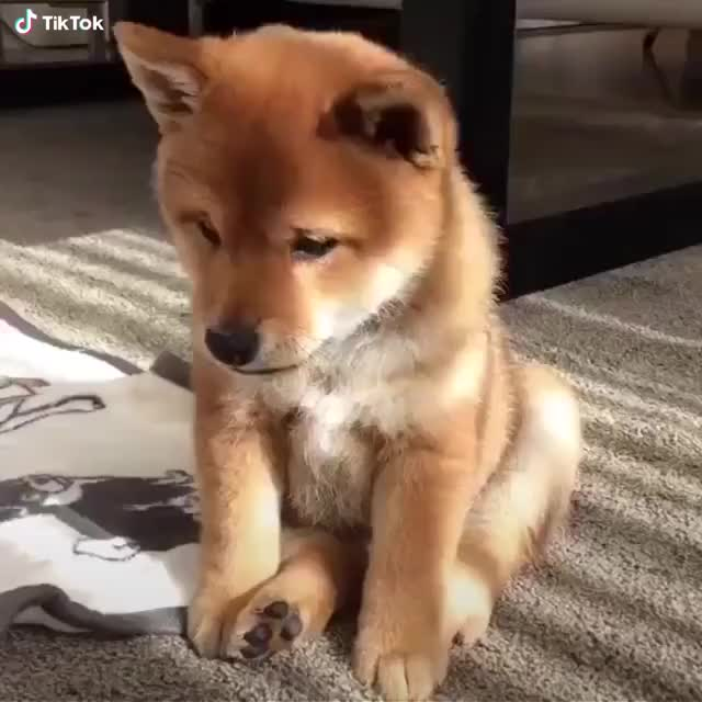 Watch a sleepy puppy GIF by @loudworry on Gfycat. Discover more related GIFs on Gfycat