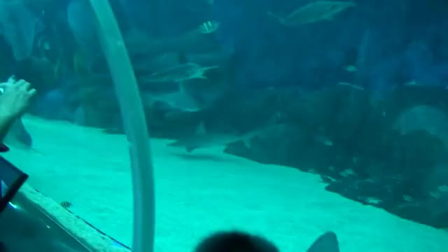 Watch and share Fish GIFs on Gfycat