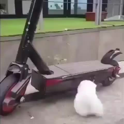 Watch and share Funnyvideos GIFs and Videochiens GIFs by alinaa on Gfycat