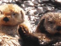 otters, couple, romance, romantic, true GIFs