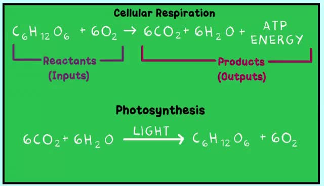 Watch and share Cellular Respiration And The Mighty Mitochondria GIFs on Gfycat