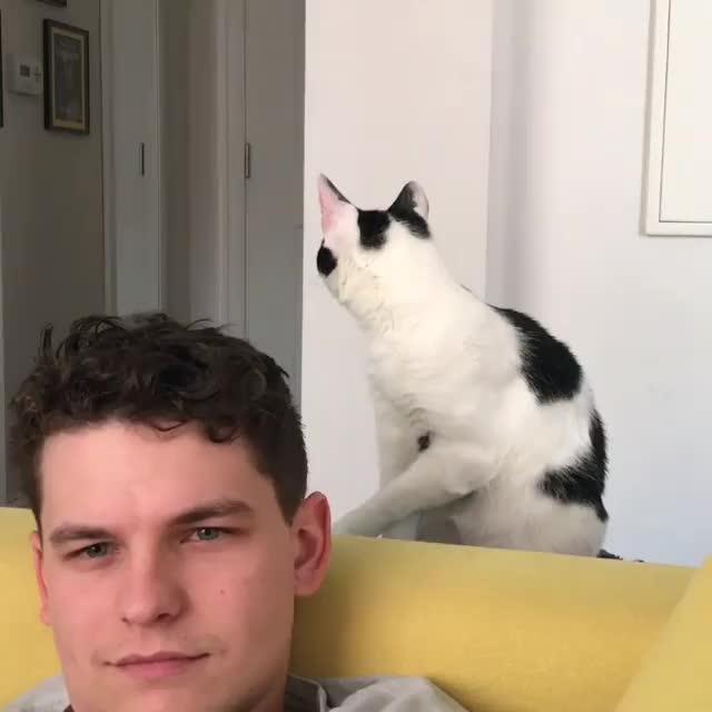 cat, A779E8D1-6E9E-43A7-A720-E41A1268ACBF GIFs