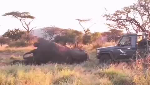 adrian tordiffe, alittlehelp, elephant, landcruiser, landcruiservideos, onderstepoort, southafrica, universityofpretoria, vet, veterinary, wildlife, After vet procedures requiring anesthetic bull elephants require a boost because of their unusual mechanics, this is how its done GIFs