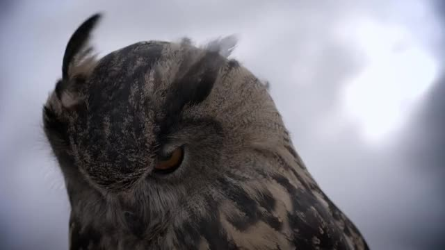 Watch this bird GIF by @kevingregor on Gfycat. Discover more bird, gifs, owl GIFs on Gfycat