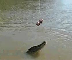 Watch and share Hungry Crocodile GIFs on Gfycat