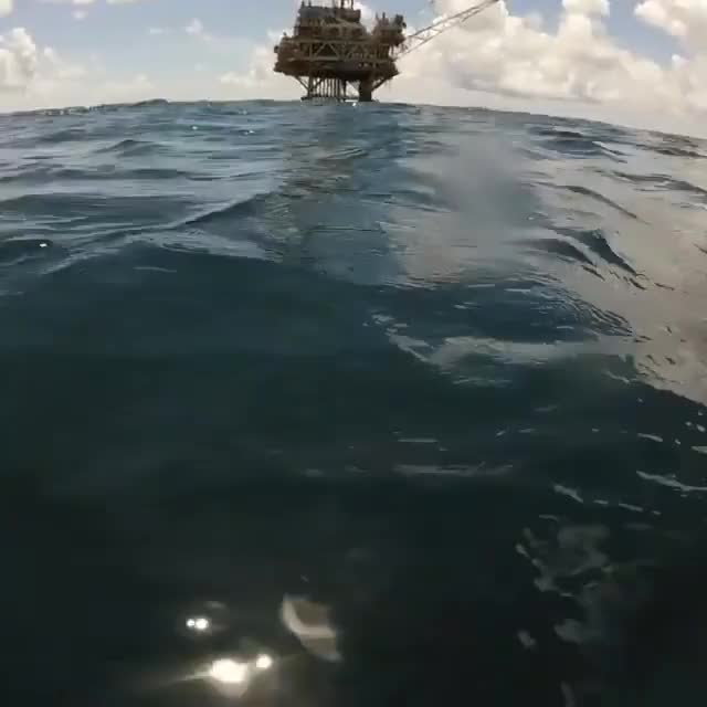 Watch and share Great White Vs Hammerhead GIFs on Gfycat