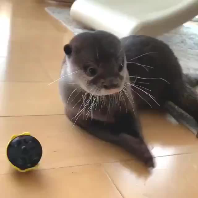 Otters 🐾, Otters 🐾 - 🐝🐝 GIFs