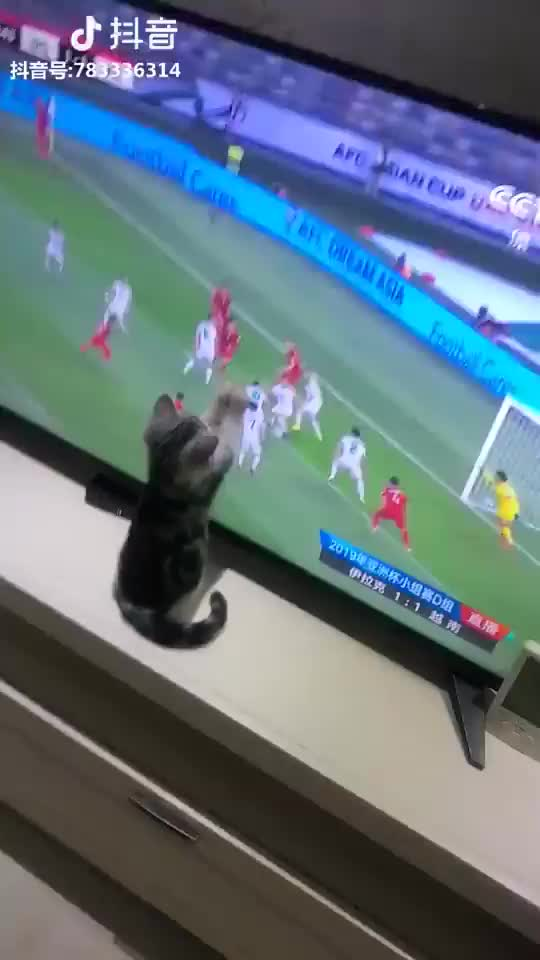 Watch and share Pets Unlimited GIFs on Gfycat