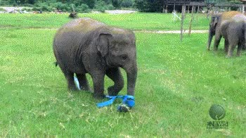 Watch this elephant GIF on Gfycat. Discover more related GIFs on Gfycat